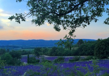 A Life Well Lived in France's Luberon Region