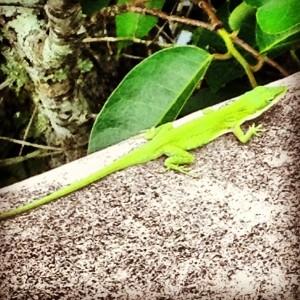 Creatures are abundant in the Everglades.