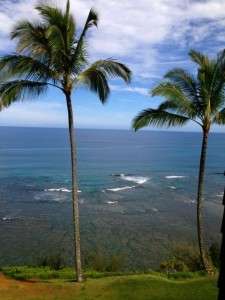 Million-dollar views at affordable SeaLodge Condominiums